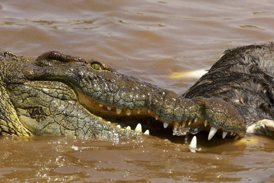 Na barragem de Nampula: Crocodilo fere e mata no rio Monapo